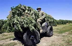 ironically all this confiscated pot will be burned. if it had been found a few days later its debatable whether or not the unfortunate grower would really be in much trouble